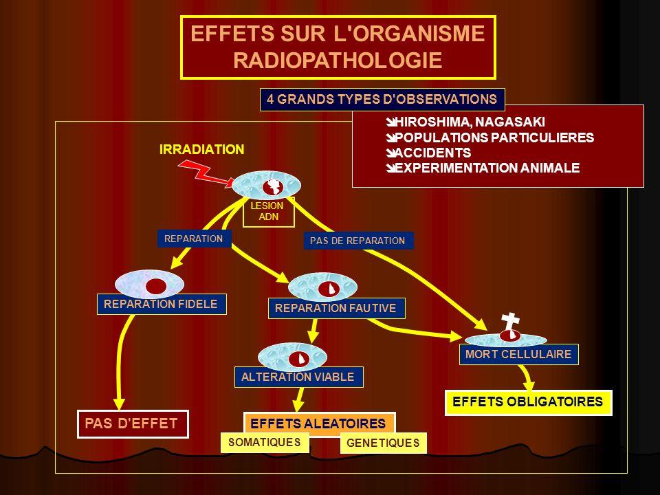 EFFETS SUR L ORGANISME RADIOPATHOLOGIE
