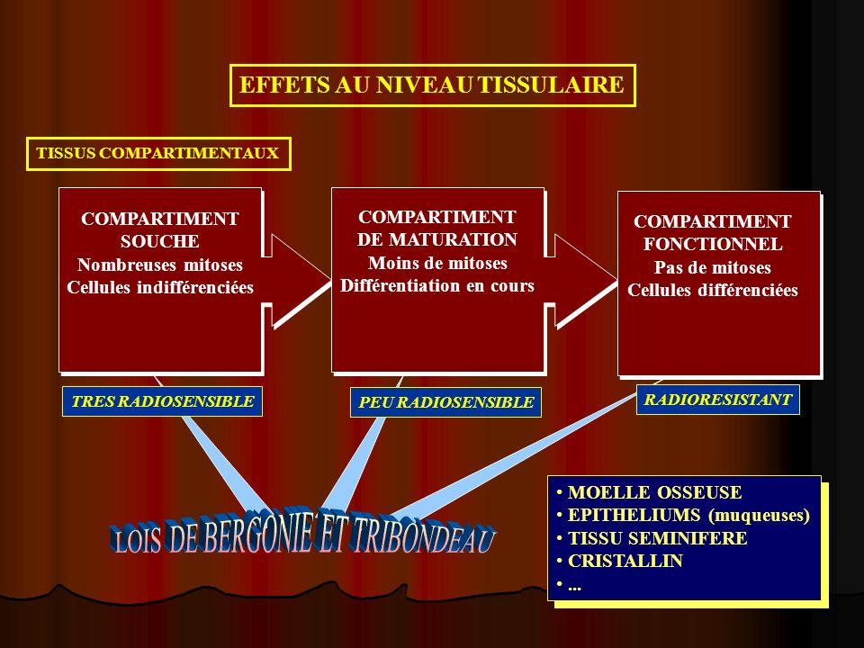 Différentiation en cours Cellules différenciées