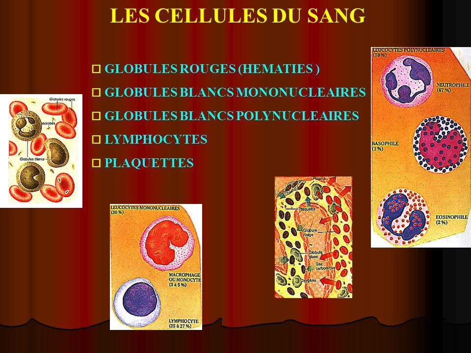 LES CELLULES DU SANG GLOBULES ROUGES (HEMATIES )