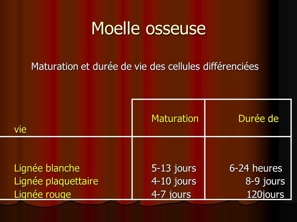 Maturation et durée de vie des cellules différenciées