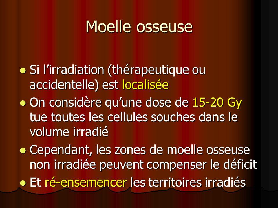 Moelle osseuse Si l'irradiation (thérapeutique ou accidentelle) est localisée.