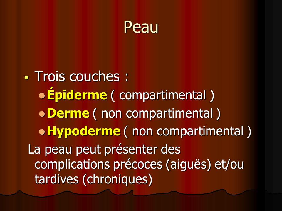 Peau Trois couches : Épiderme ( compartimental )
