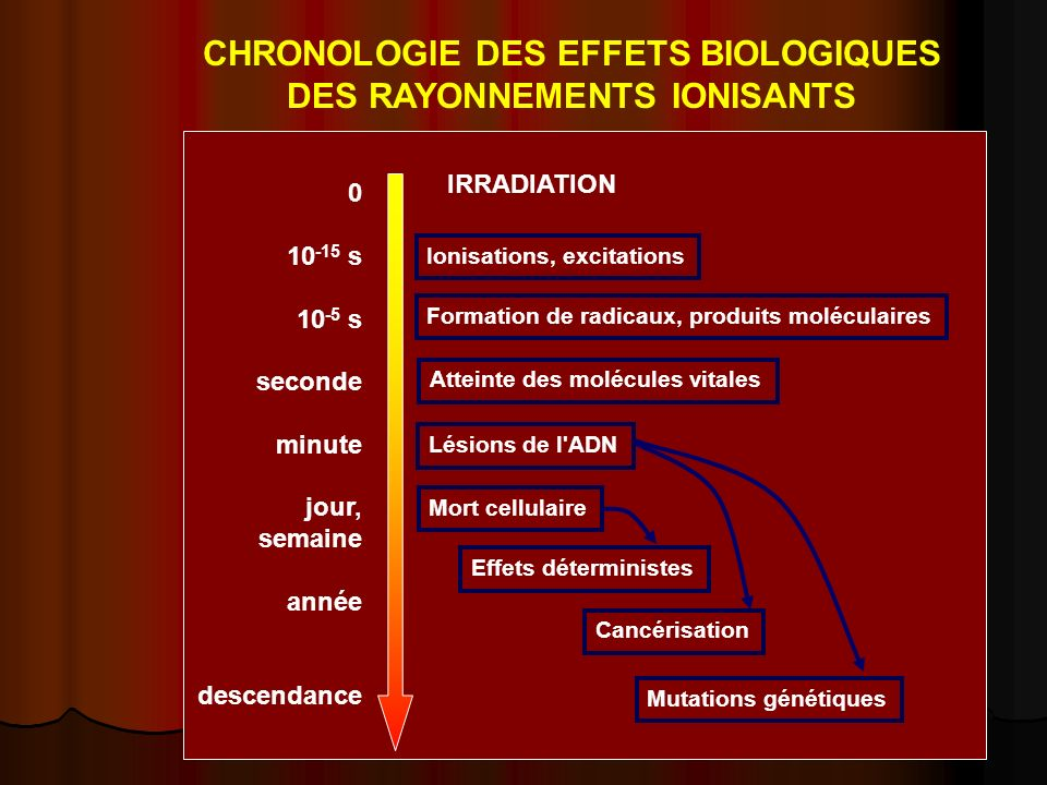 CHRONOLOGIE DES EFFETS BIOLOGIQUES DES RAYONNEMENTS IONISANTS