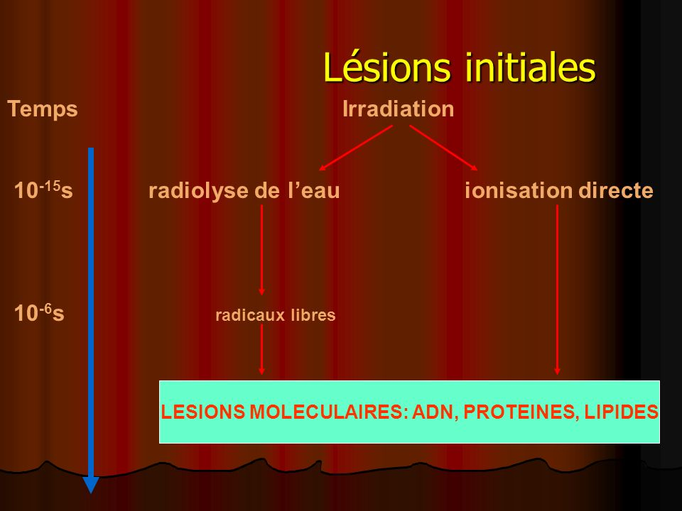 LESIONS MOLECULAIRES: ADN, PROTEINES, LIPIDES