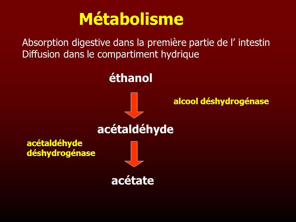 Métabolisme éthanol acétaldéhyde acétate