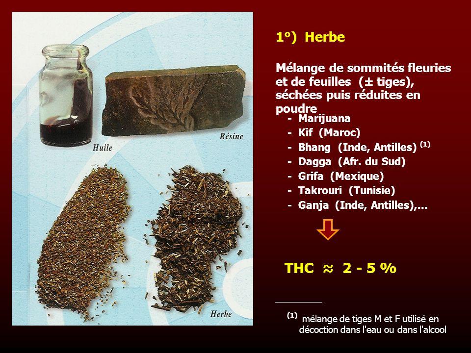 1°) Herbe Mélange de sommités fleuries et de feuilles (± tiges), séchées puis réduites en poudre.