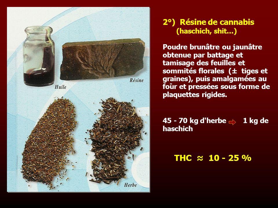THC ≈ 10 - 25 % 2°) Résine de cannabis (haschich, shit...)