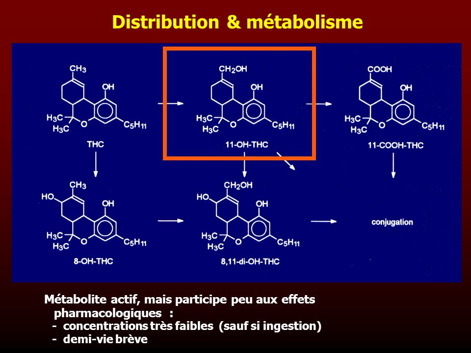Distribution & métabolisme