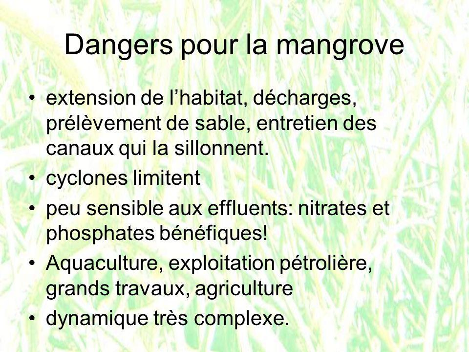 Dangers pour la mangrove