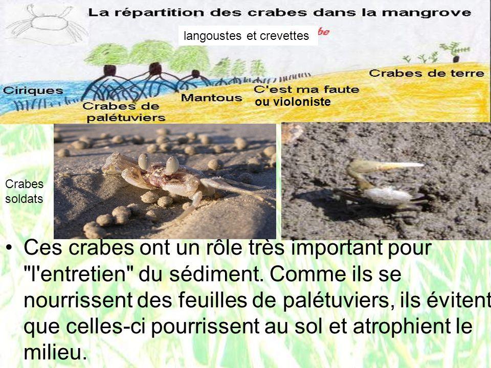 langoustes et crevettes