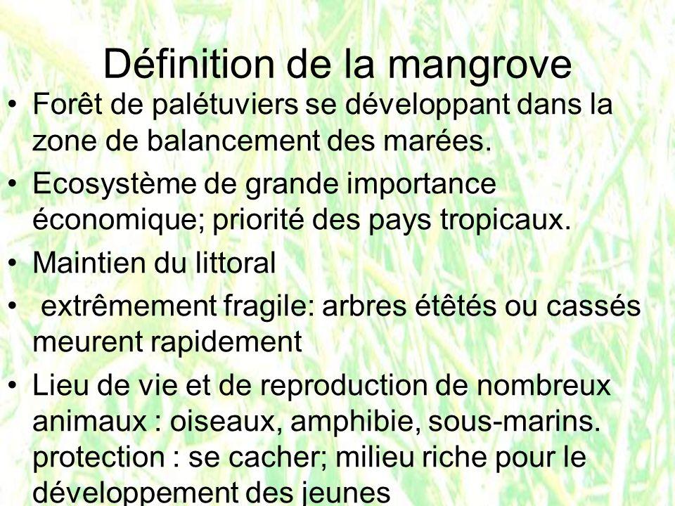 Définition de la mangrove