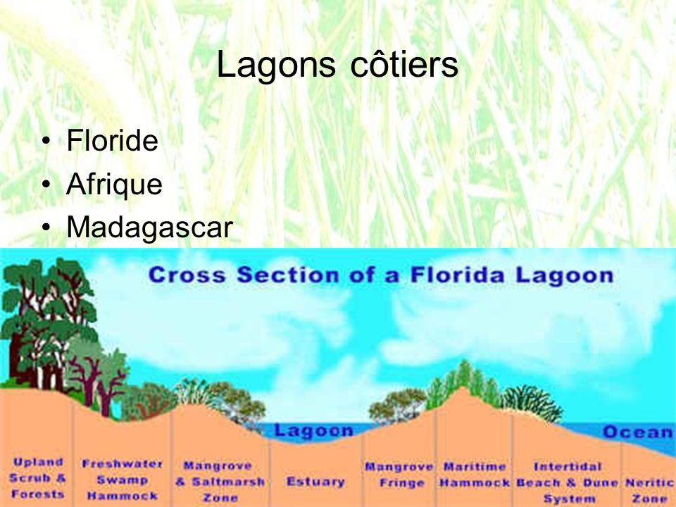 Lagons côtiers Floride Afrique Madagascar