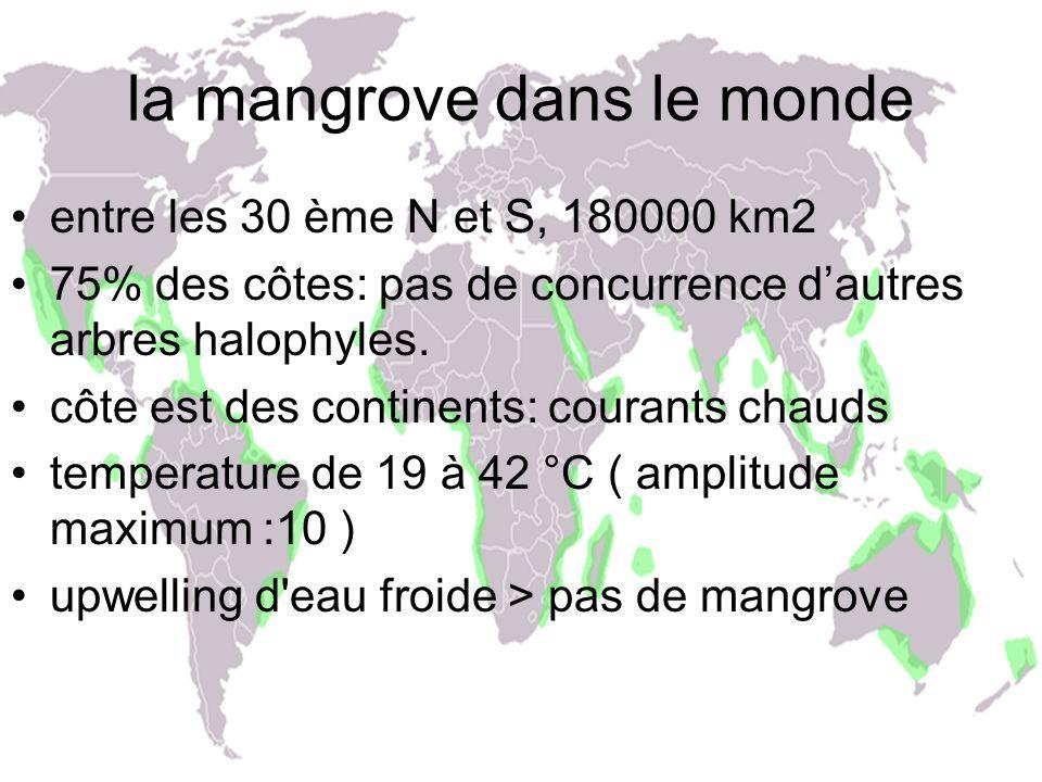 la mangrove dans le monde