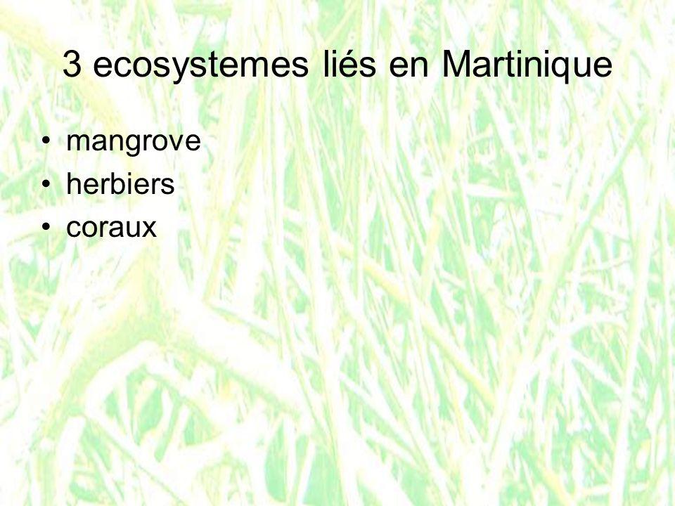 3 ecosystemes liés en Martinique