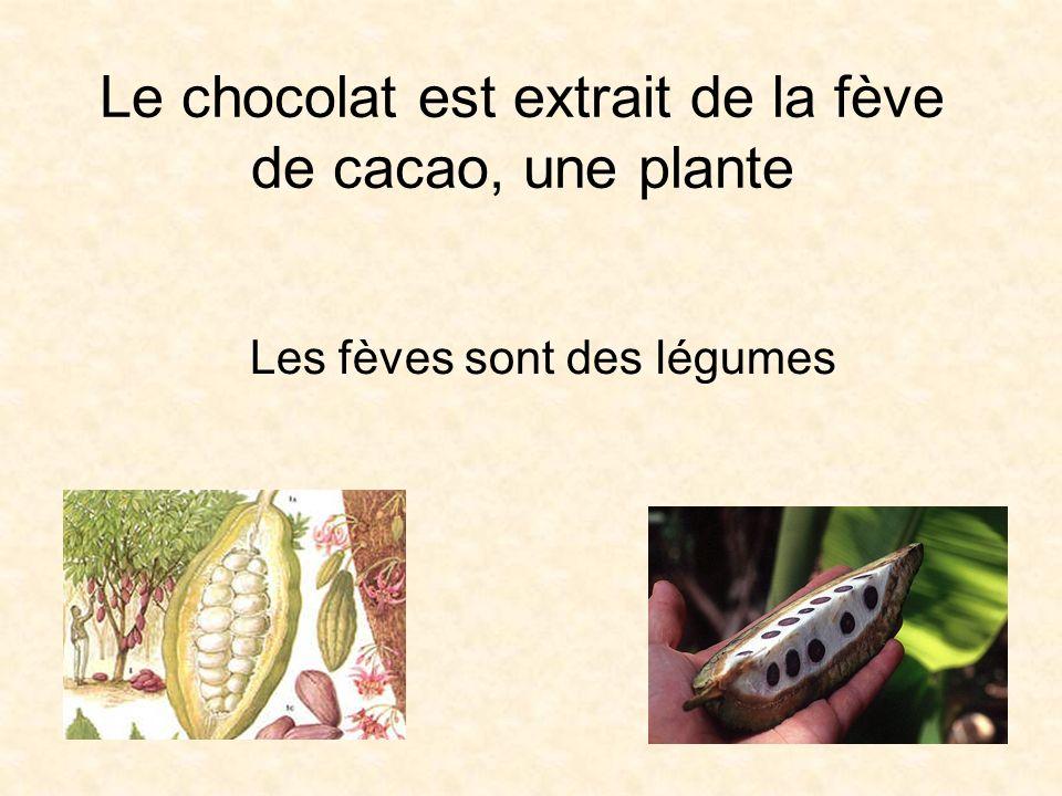 Le chocolat est extrait de la fève de cacao, une plante