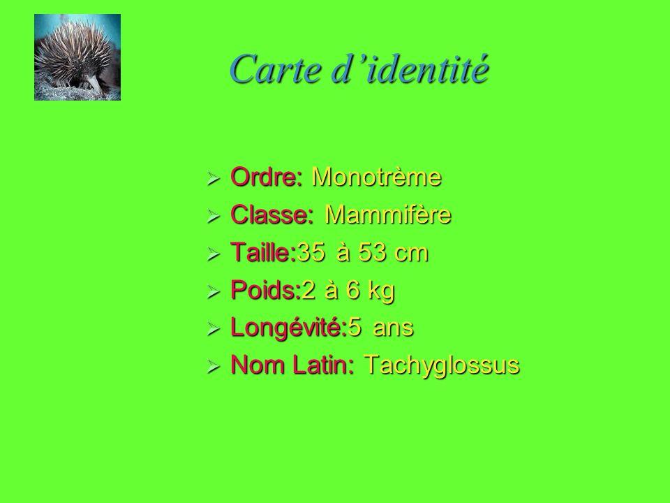Carte d'identité Ordre: Monotrème Classe: Mammifère Taille:35 à 53 cm