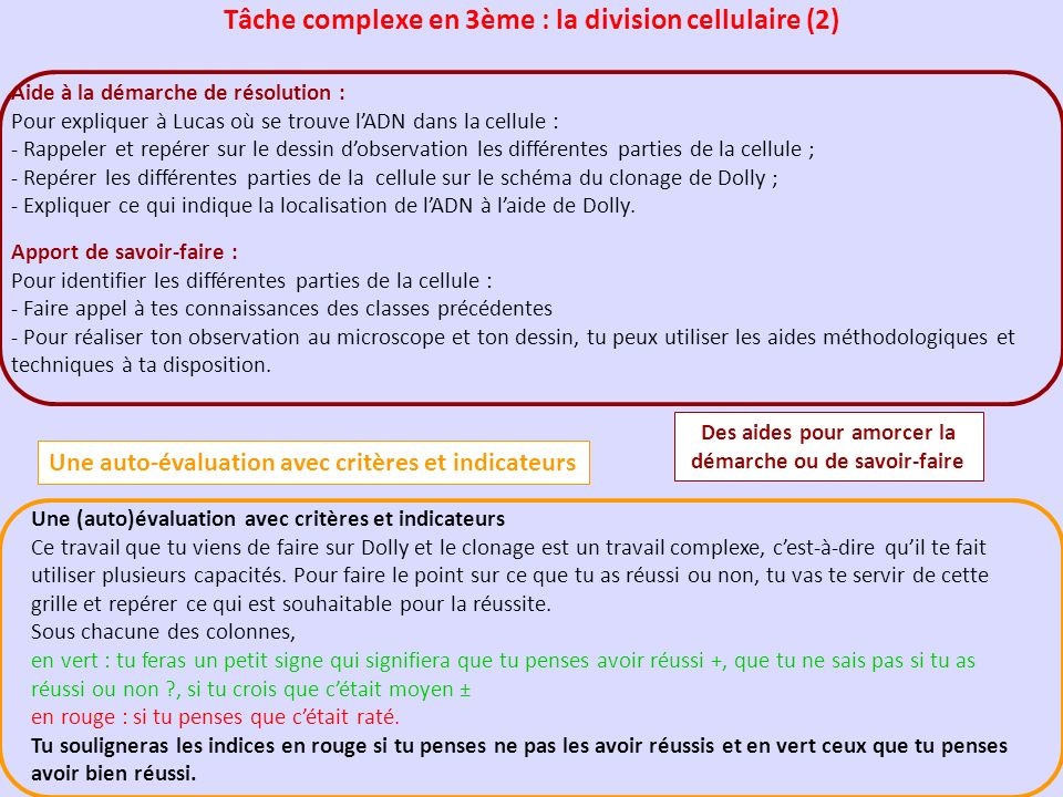 Tâche complexe en 3ème : la division cellulaire (2)