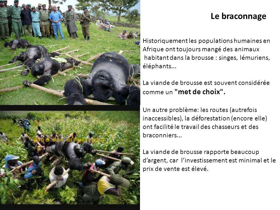Le braconnage Historiquement les populations humaines en Afrique ont toujours mangé des animaux.