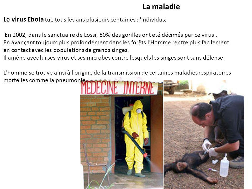 La maladie Le virus Ebola tue tous les ans plusieurs centaines d individus.