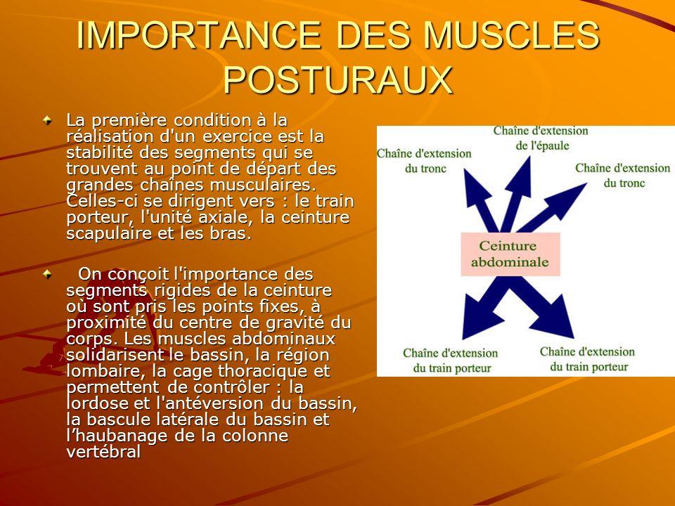 IMPORTANCE DES MUSCLES POSTURAUX