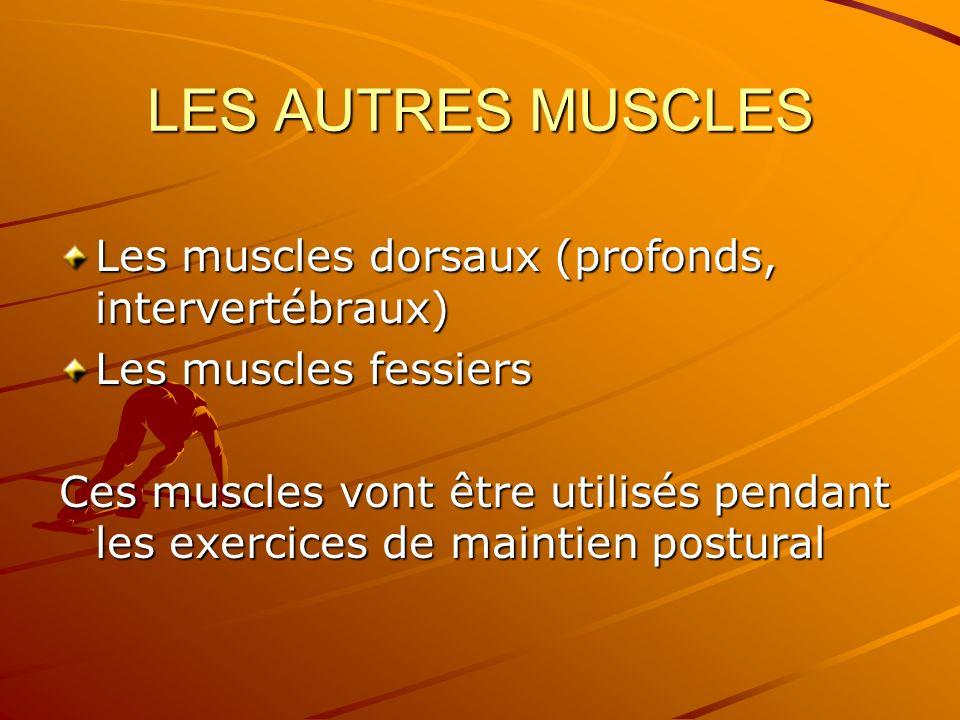 LES AUTRES MUSCLES Les muscles dorsaux (profonds, intervertébraux)
