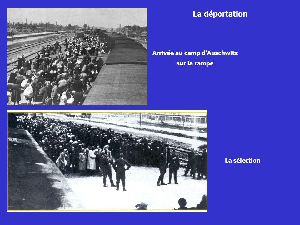 Arrivée au camp d'Auschwitz
