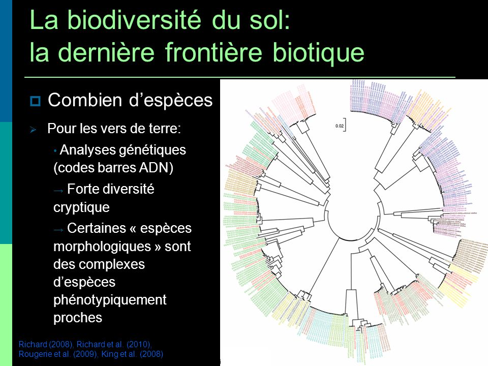 La biodiversité du sol: la dernière frontière biotique