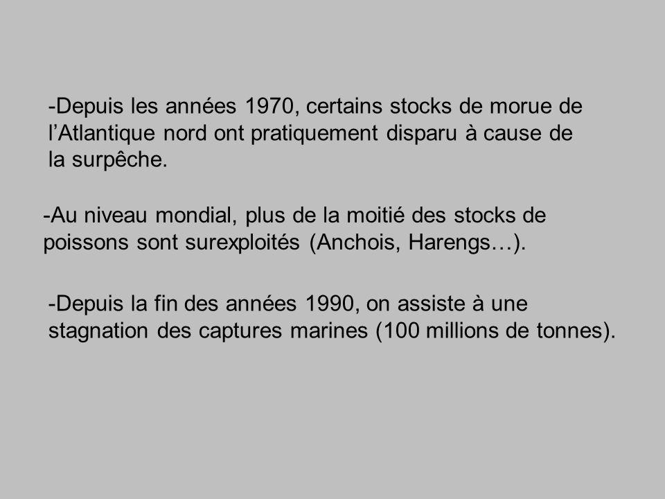 -Depuis les années 1970, certains stocks de morue de l'Atlantique nord ont pratiquement disparu à cause de la surpêche.