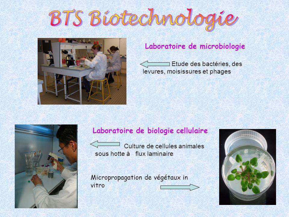 BTS Biotechnologie Laboratoire de microbiologie