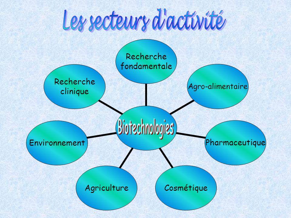 Les secteurs d activité