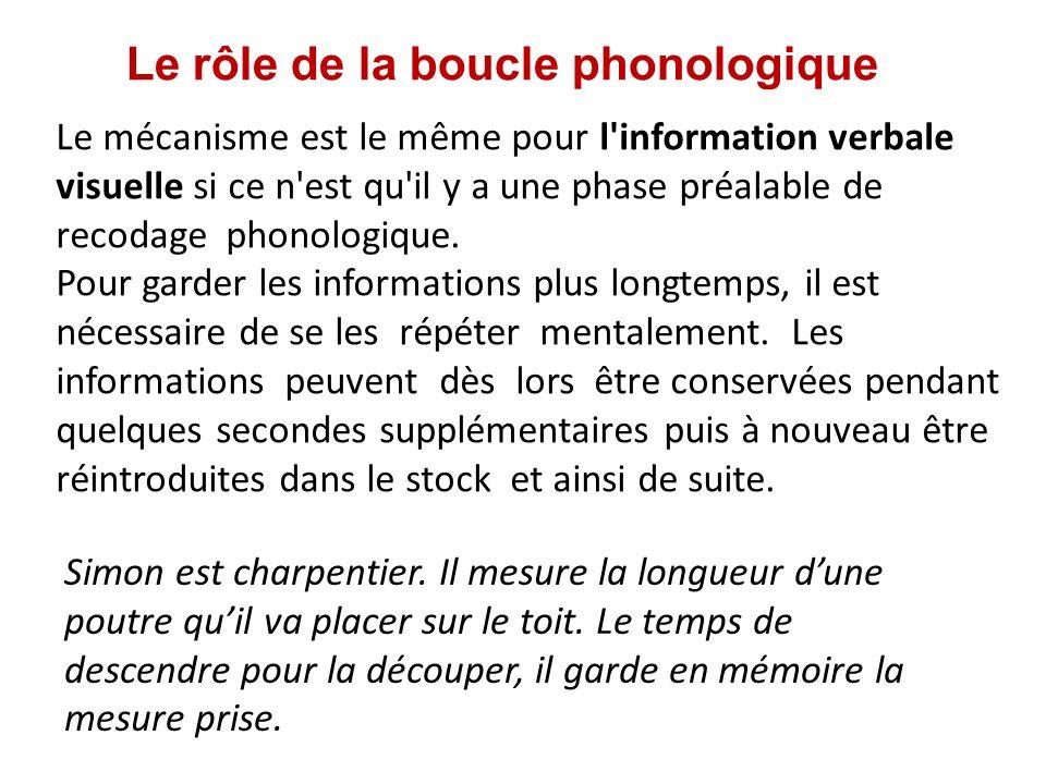 Le rôle de la boucle phonologique