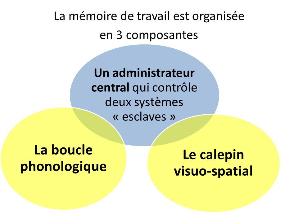 La mémoire de travail est organisée en 3 composantes