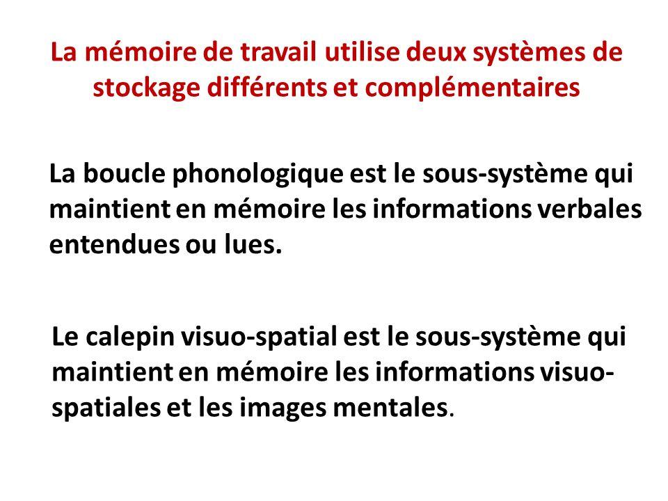 La mémoire de travail utilise deux systèmes de stockage différents et complémentaires