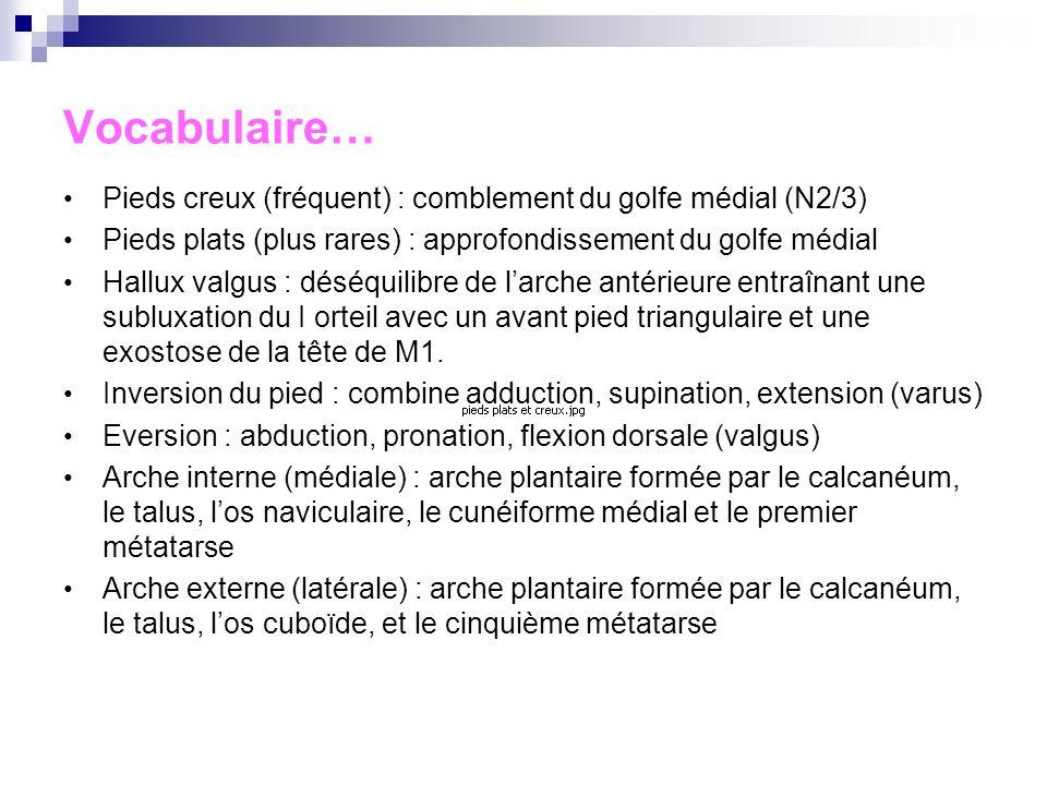 Vocabulaire… Pieds creux (fréquent) : comblement du golfe médial (N2/3) Pieds plats (plus rares) : approfondissement du golfe médial.