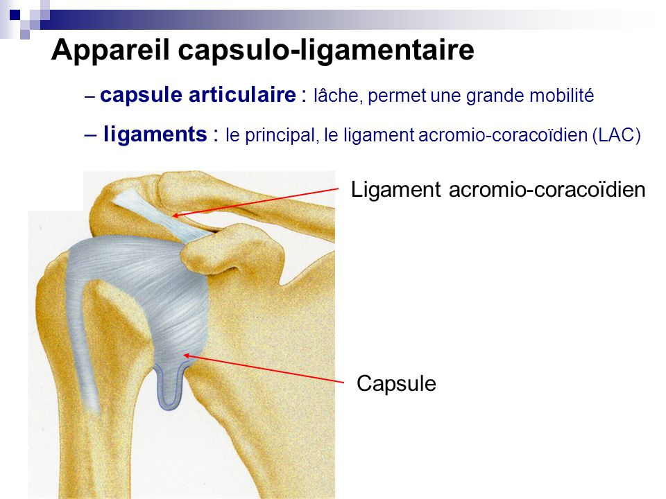 Appareil capsulo-ligamentaire