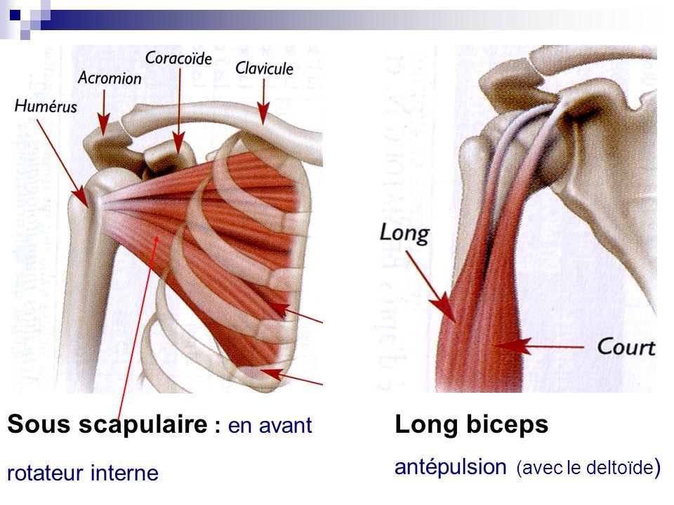 Sous scapulaire : en avant Long biceps