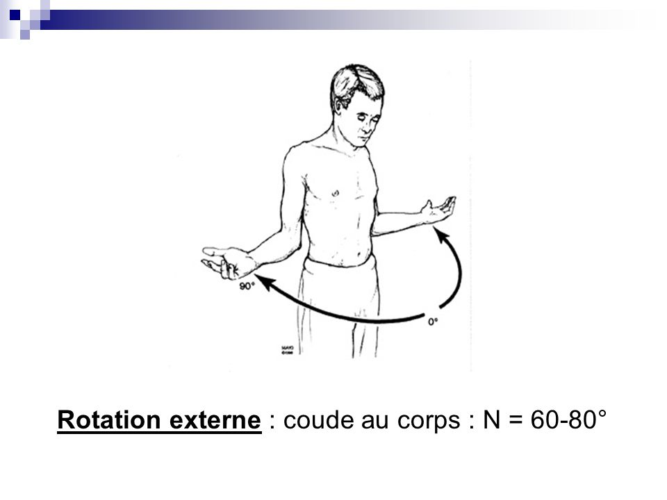 Rotation externe : coude au corps : N = 60-80°