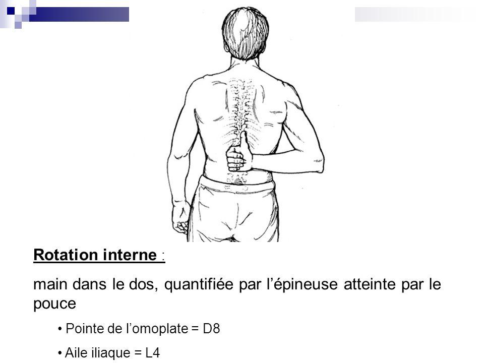 main dans le dos, quantifiée par l'épineuse atteinte par le pouce