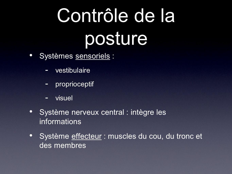 Contrôle de la posture Systèmes sensoriels :