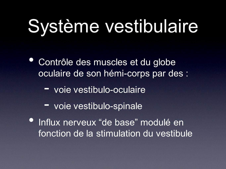 Système vestibulaire Contrôle des muscles et du globe oculaire de son hémi-corps par des : voie vestibulo-oculaire.