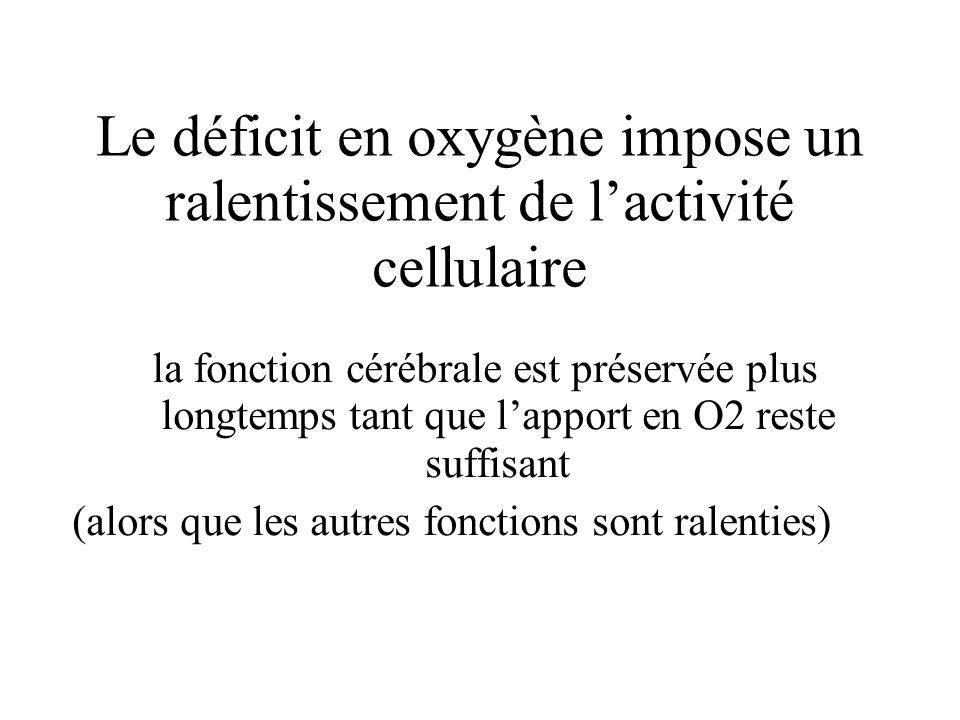 Le déficit en oxygène impose un ralentissement de l'activité cellulaire