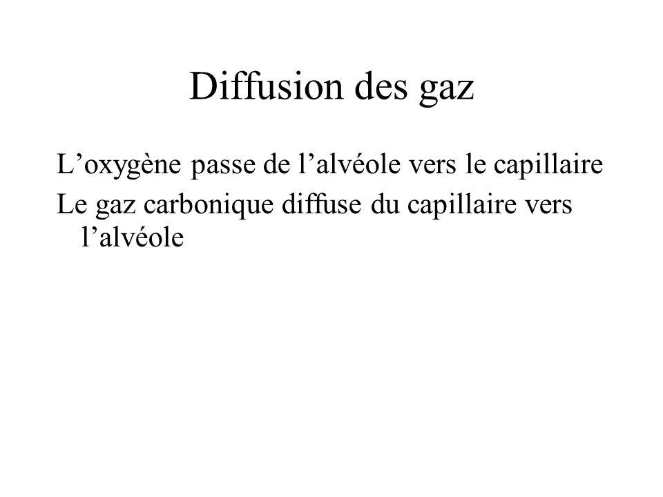 Diffusion des gaz L'oxygène passe de l'alvéole vers le capillaire