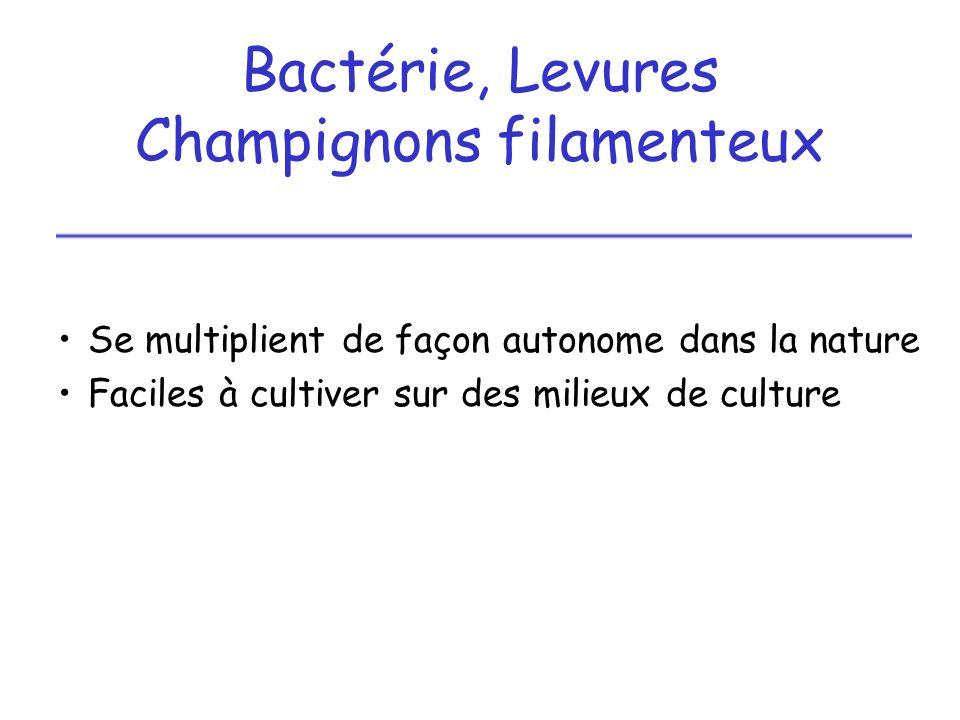 Champignons filamenteux