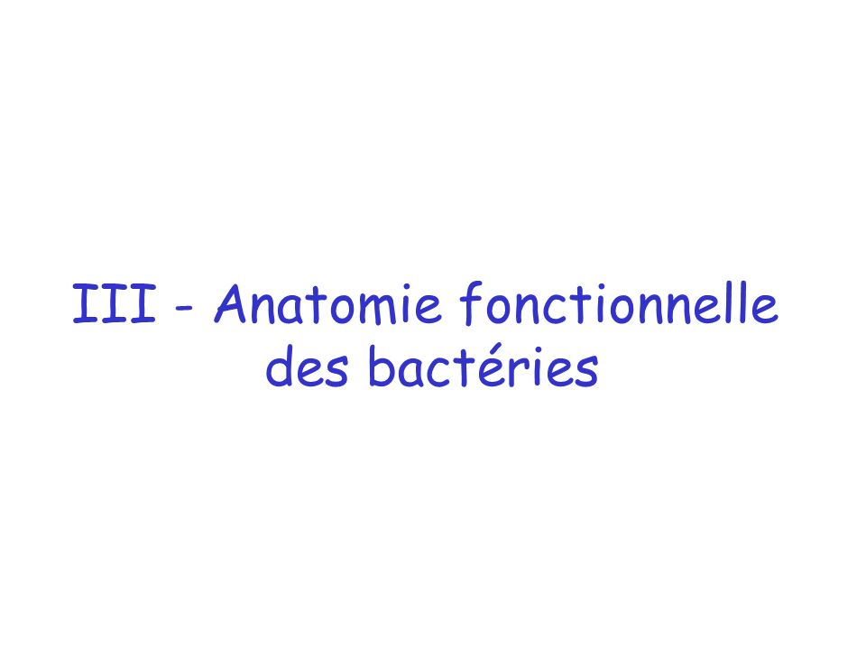 III - Anatomie fonctionnelle