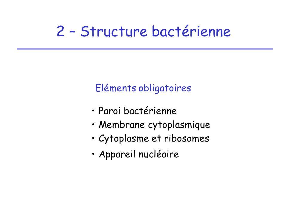 2 – Structure bactérienne