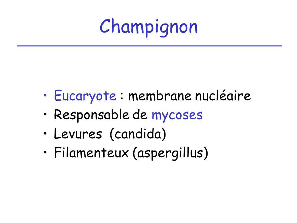 Champignon Eucaryote : membrane nucléaire Responsable de mycoses