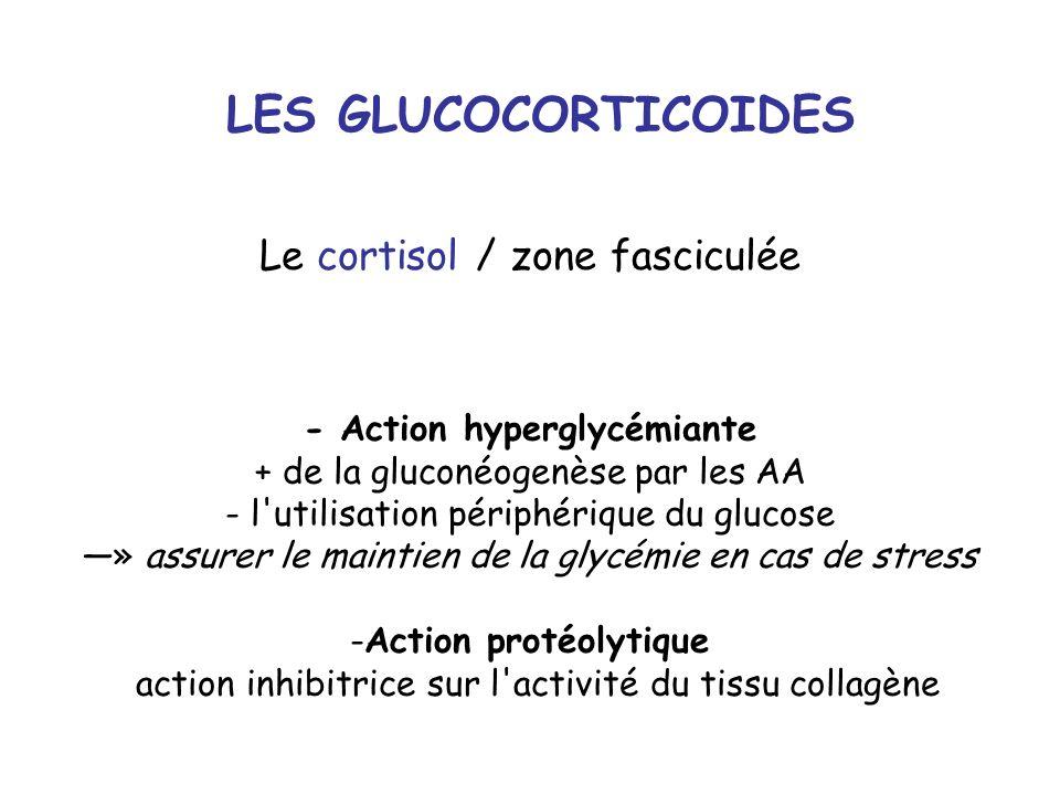 LES GLUCOCORTICOIDES Le cortisol / zone fasciculée