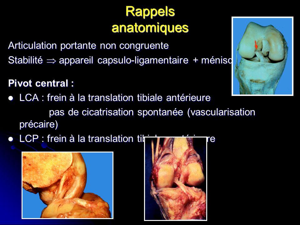 Rappels anatomiques Articulation portante non congruente