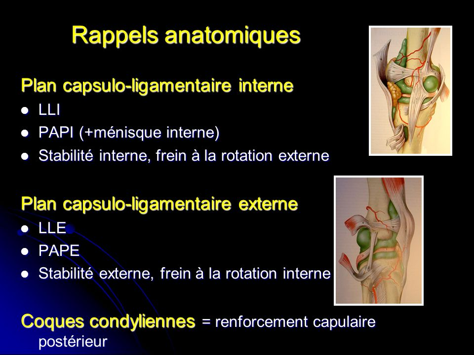 Rappels anatomiques Plan capsulo-ligamentaire interne