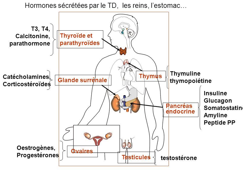 Hormones sécrétées par le TD, les reins, l'estomac…